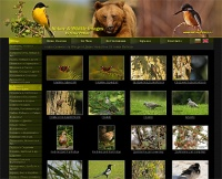 Cheap web sites , web site за NaturePhotos.eu