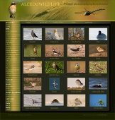 Cheap web sites , web site за Alcedo WildLife