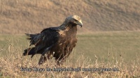 Films and clips, On the wings of the Eagle за Bulgarian Society for Protection of the Birds