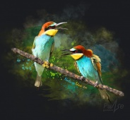 Souvenirs, T-shirts, Original t-shirts design with quality print of a bird
